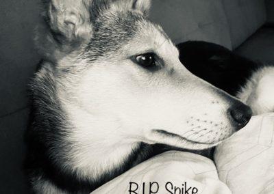 Spike †