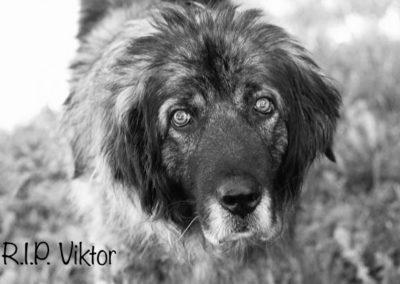 Viktor †