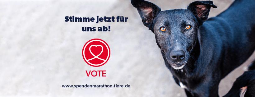 STIMME AB FÜR UNS – Damit wir beim SPENDEN-MARATHON FÜR TIERE 2021 dabei sein können!