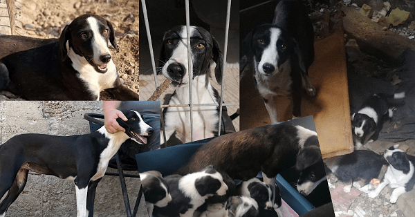 Hilfst du Ava dabei auszureisen? Sie will den Winter nicht im kalten Tierheim verbringen müssen!
