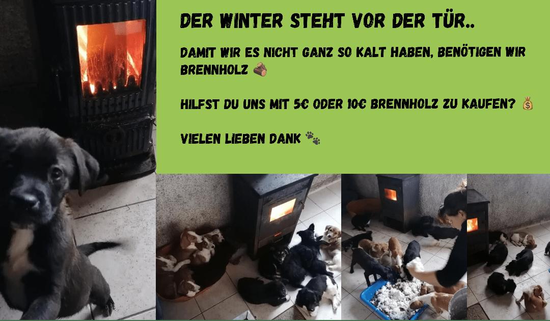 Der Winter steht vor der Tür.. Wir benötigen dringend Brennholz für die Kleinsten und Schwächsten in unserem Tierheim